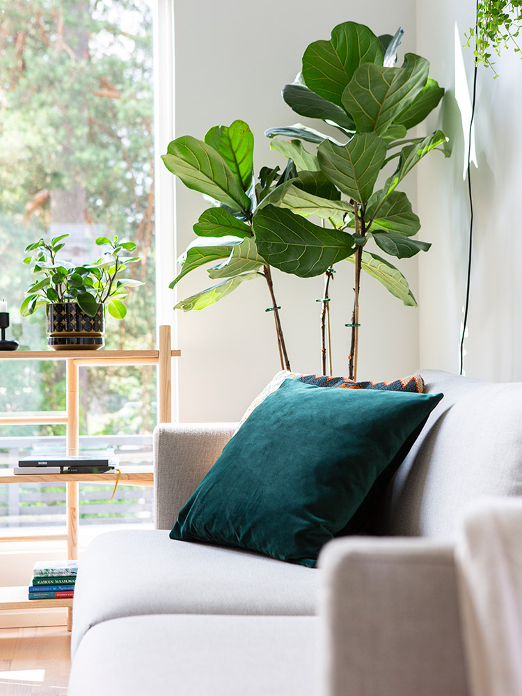 Hakola Friends: Lazy-sohva, tyyny, Musone-kankaalla ja edit hylly.