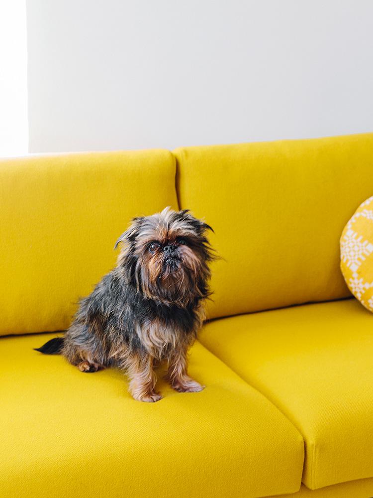 Hakola Friends: Cosy Pocket Wool -sohva ja Sisu koira Tomin kotona