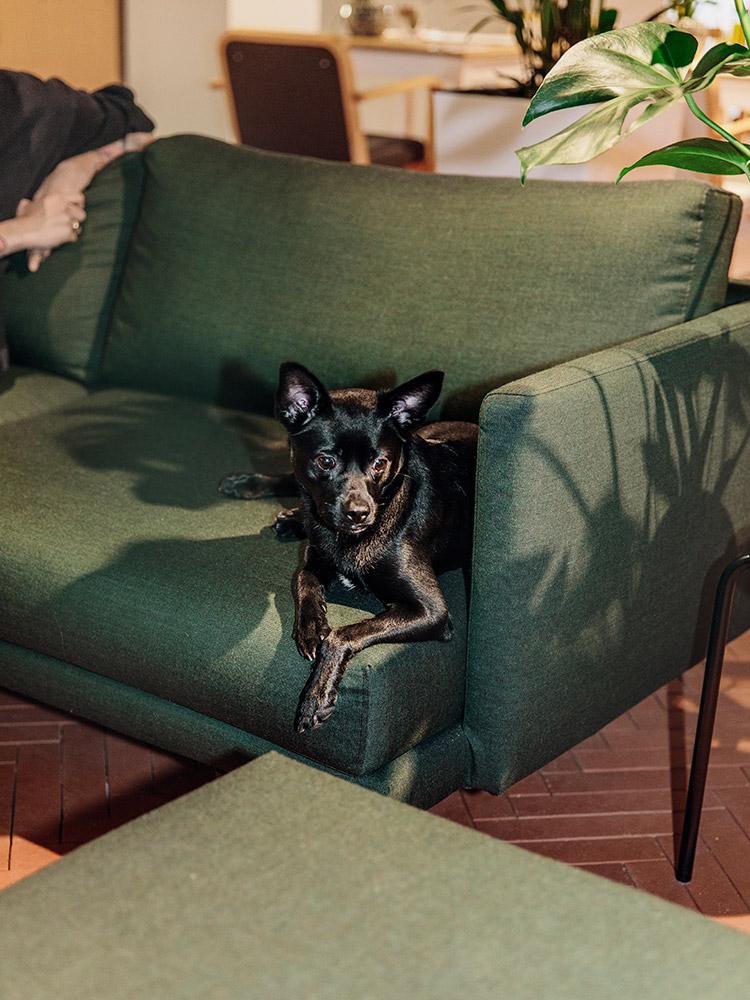Hakola Friends: Lazy Wool -sohva Kuuma kahvilassa