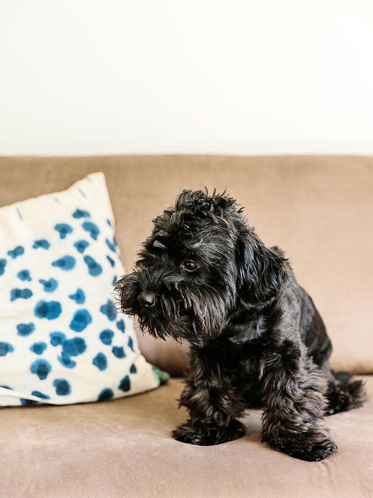 Hakola Friends: 3:n istuttava Lazy Velvet -sohva harmaanruskealla Musone-kankaalla Minnin kotona.